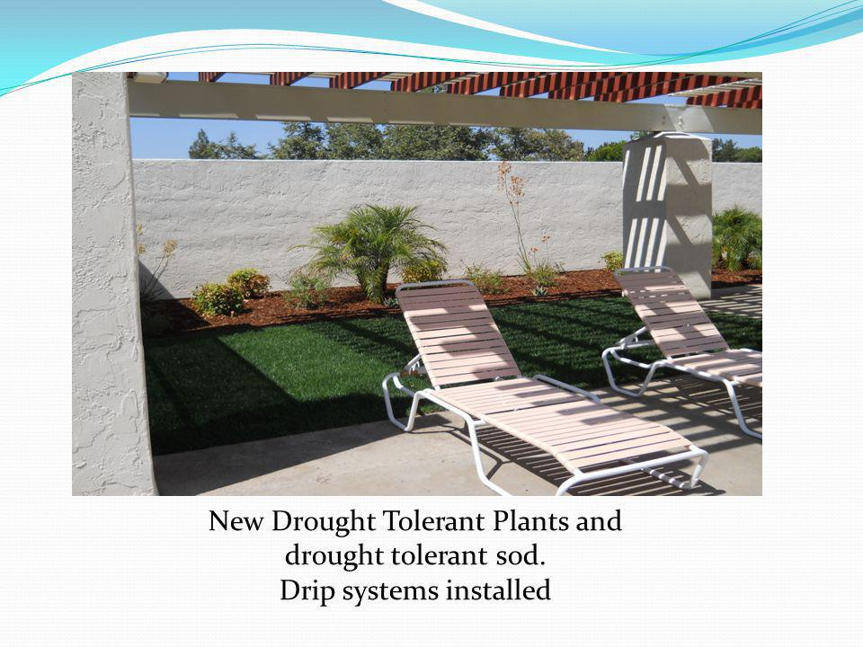 New Drought Tolerant Plants and drought tolerant sod. Drip systems installed