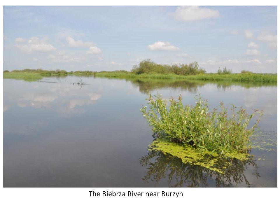 The Biebrza River with the swamp beyond. Near Burzyn.