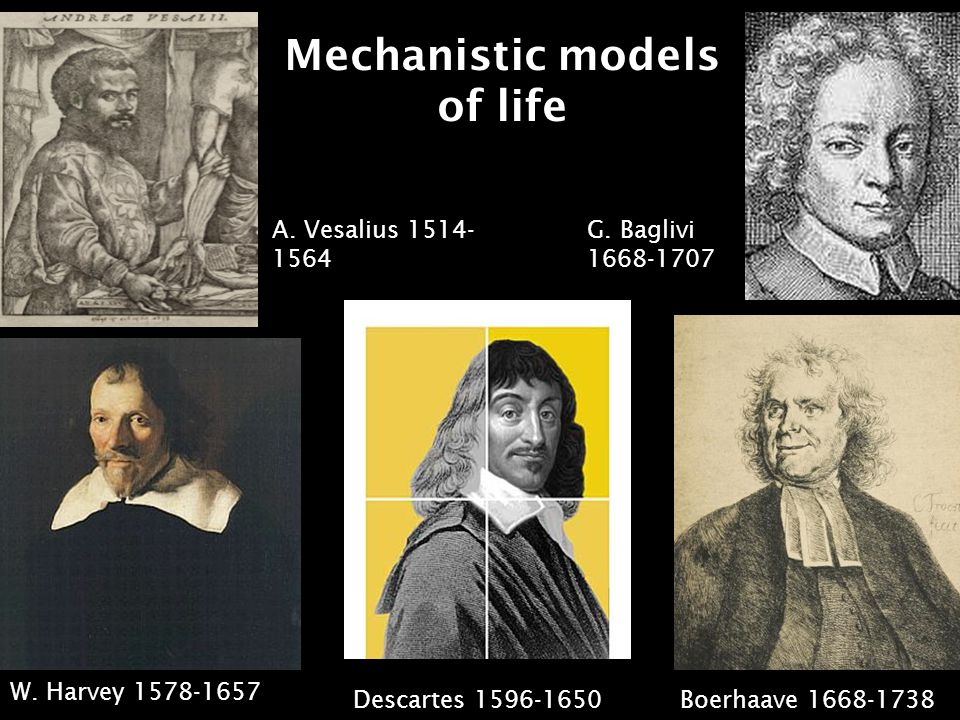 Mechanistic models of life W. Harvey 1578-1657 R.