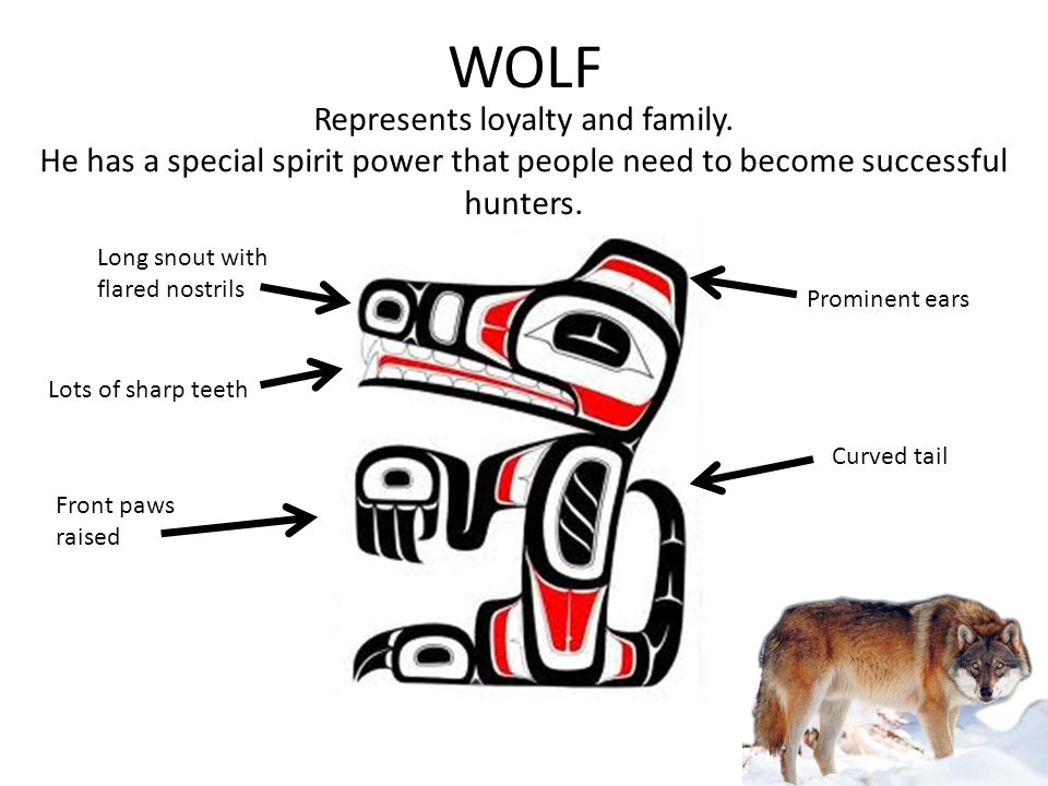 WOLF Represents loyalty and family. He has a special spirit power that people need to become successful hunters. Front paws raised Curved tail Long sn