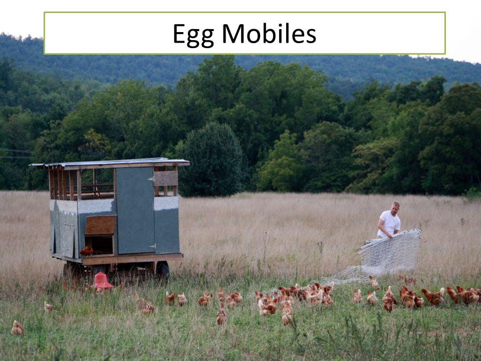 Egg Mobiles