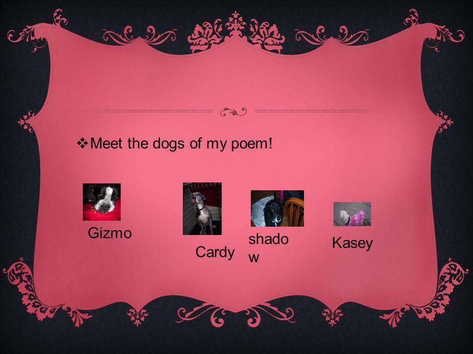 Meet the dogs of my poem! Gizmo Cardy shado w Kasey
