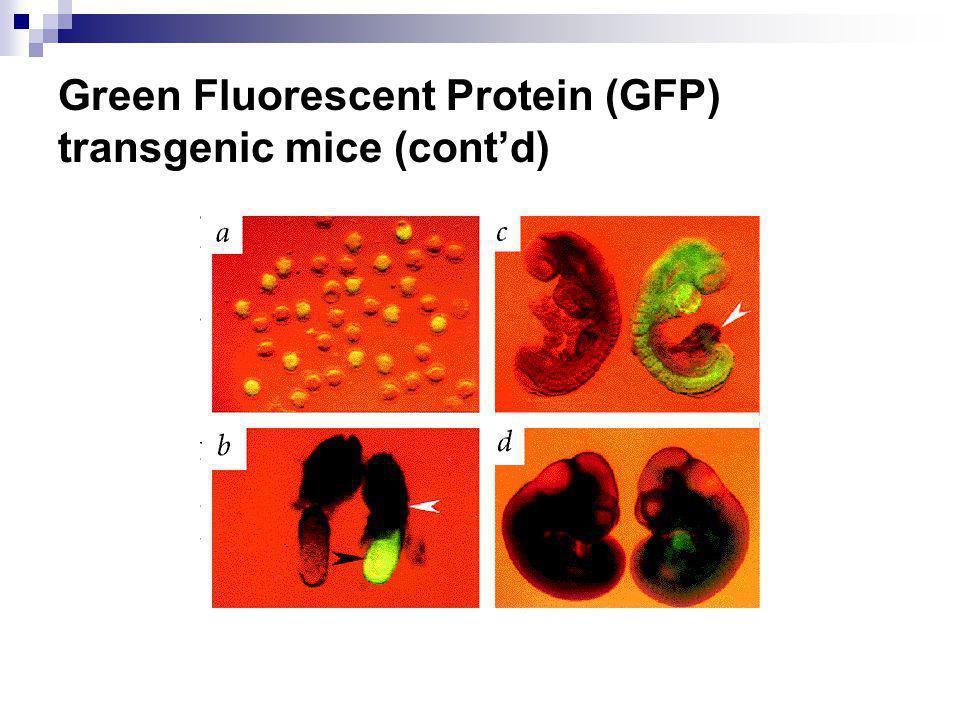 Green Fluorescent Protein (GFP) transgenic mice (contd)