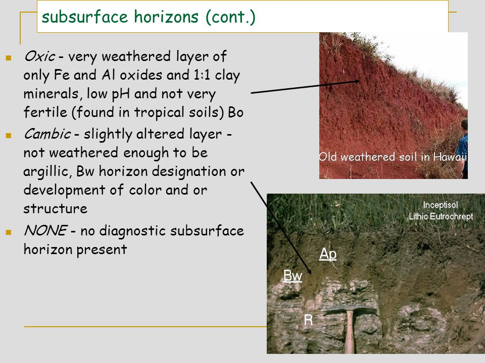 subsurface horizons (cont.) Oxic - very weathered layer of only Fe and Al oxides and 1:1 clay minerals, low pH and not very fertile (found in tropical