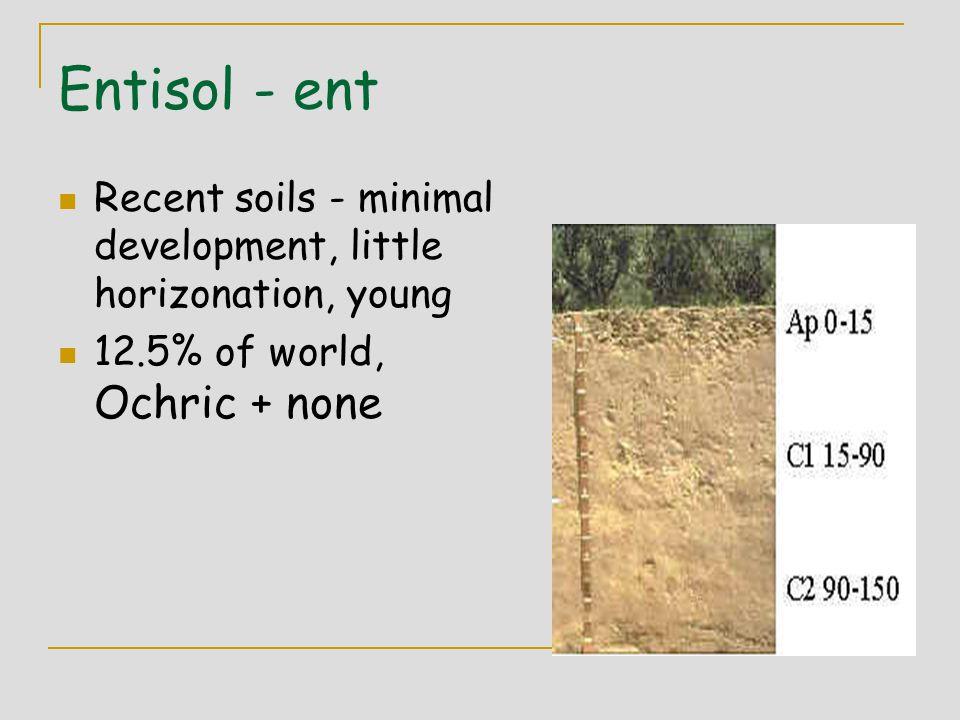 Entisol - ent Recent soils - minimal development, little horizonation, young soils. 12.5% of world, Ochric + none