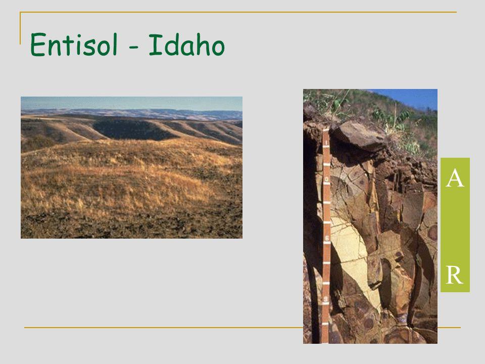 Entisol - Idaho ARAR