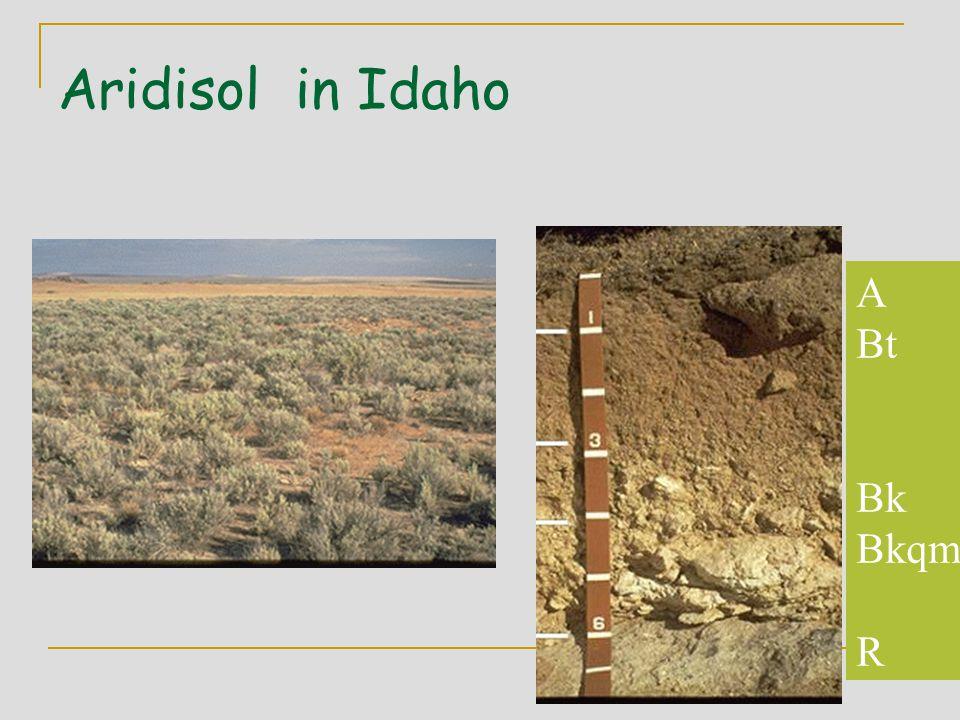Aridisol in Idaho A Bt Bk Bkqm R