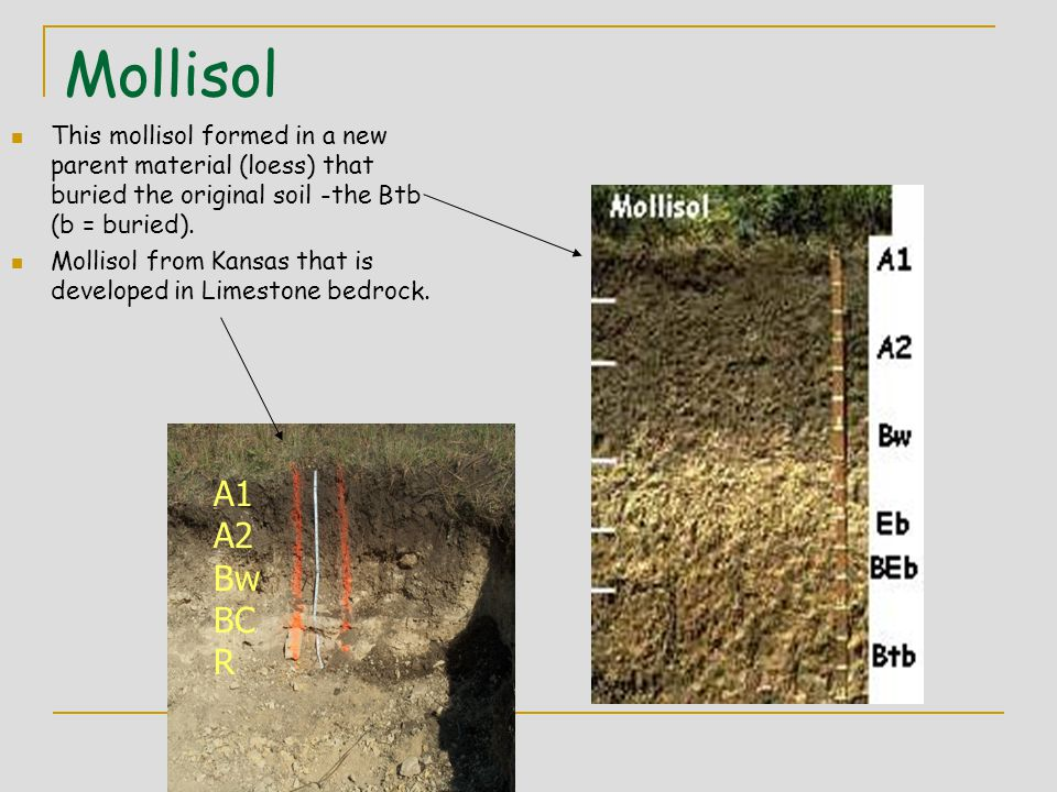 Mollisol This mollisol formed in a new parent material (loess) that buried the original soil -the Btb (b = buried). Mollisol from Kansas that is devel