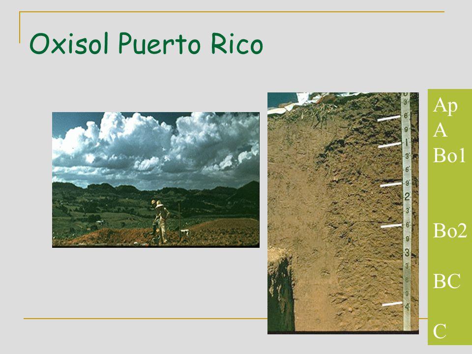 Oxisol Puerto Rico Ap A Bo1 Bo2 BC C