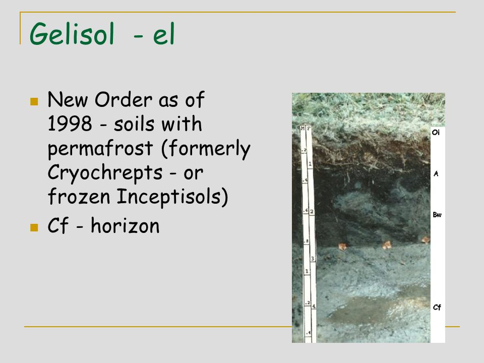 Gelisol - el New Order as of 1998 - soils with permafrost (formerly Cryochrepts - or frozen Inceptisols) Cf - horizon