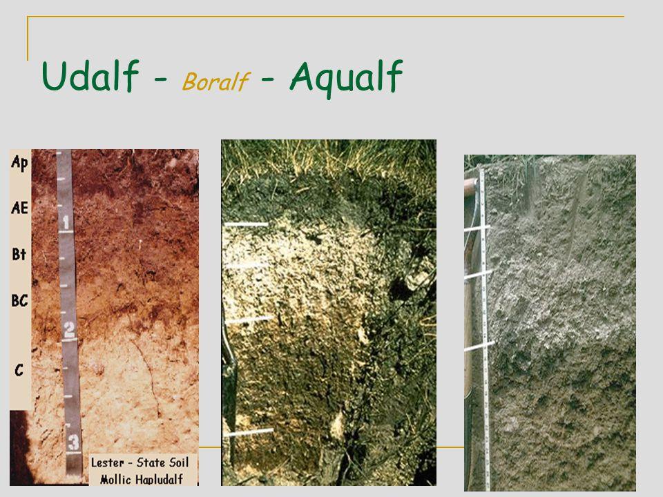 Udalf - Boralf - Aqualf