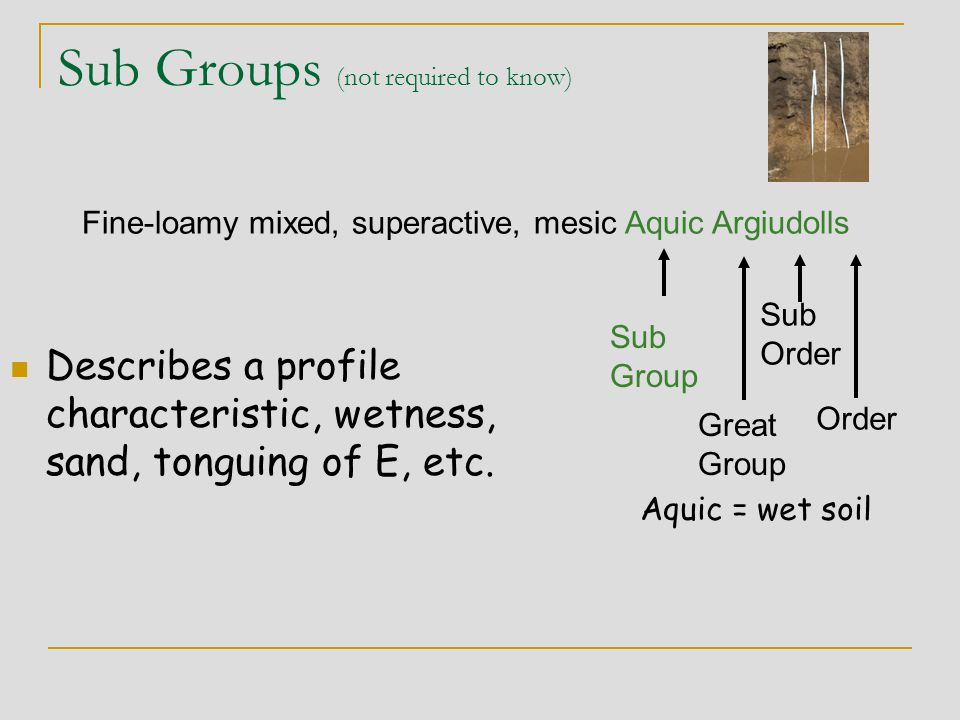Sub Groups (not required to know) Describes a profile characteristic, wetness, sand, tonguing of E, etc. Great Group Fine-loamy mixed, superactive, me
