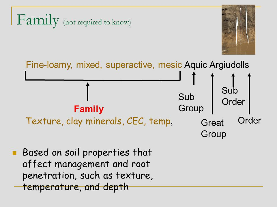 Family (not required to know) Based on soil properties that affect management and root penetration, such as texture, temperature, and depth Great Grou
