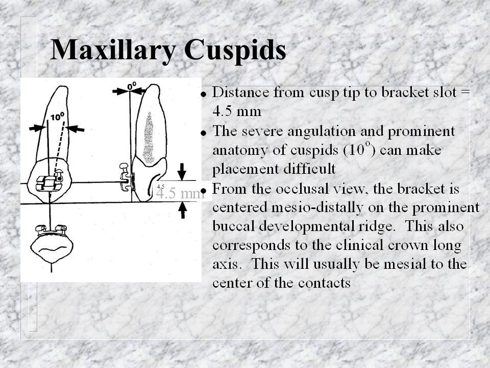 Maxillary Cuspids 4.5 4.5 mm