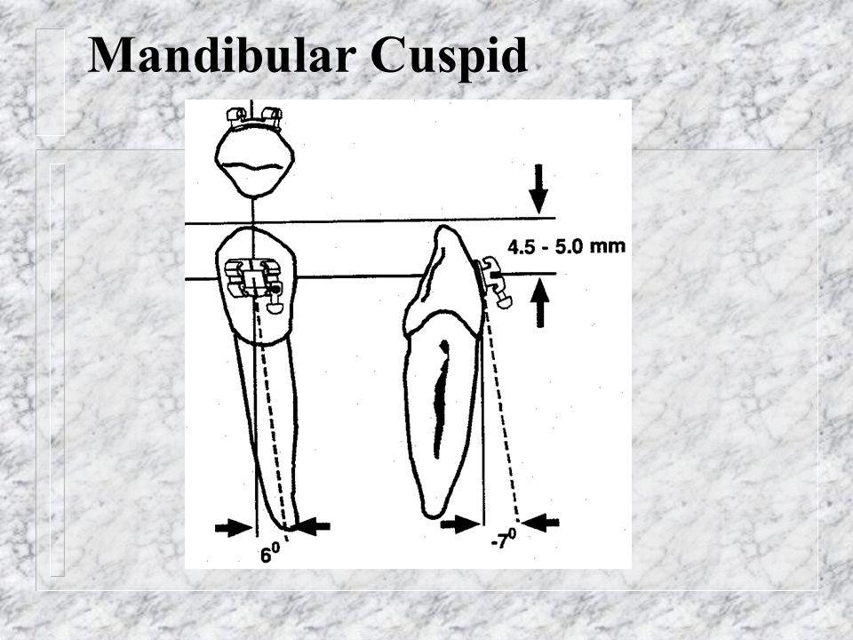 Mandibular Cuspid