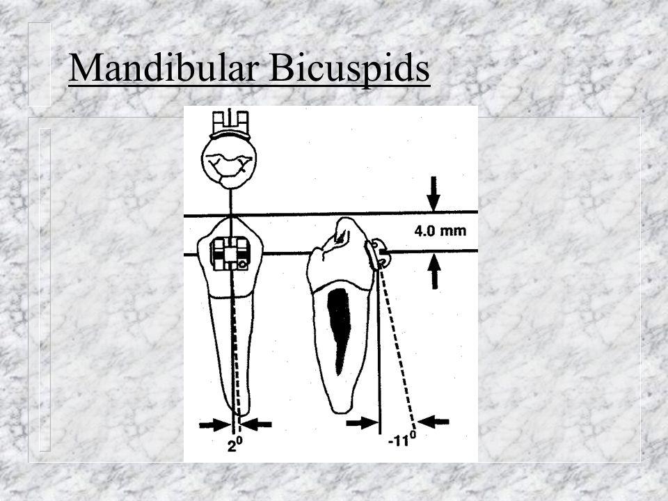 Mandibular Bicuspids