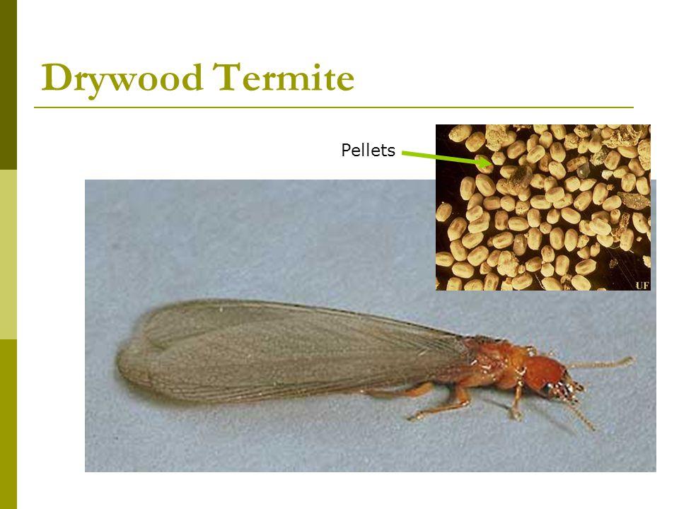 Drywood Termite Pellets