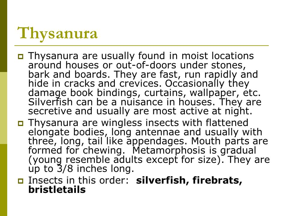 Thysanura Thysanura are usually found in moist locations around houses or out-of-doors under stones, bark and boards. They are fast, run rapidly and h