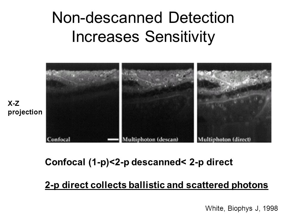 White, Biophys J, 1998 Confocal (1-p)<2-p descanned< 2-p direct 2-p direct collects ballistic and scattered photons X-Z projection Non-descanned Detec