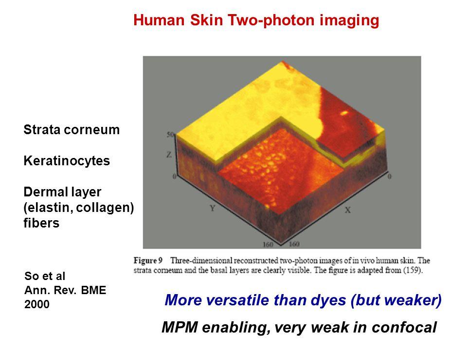 Strata corneum Keratinocytes Dermal layer (elastin, collagen) fibers Human Skin Two-photon imaging So et al Ann.