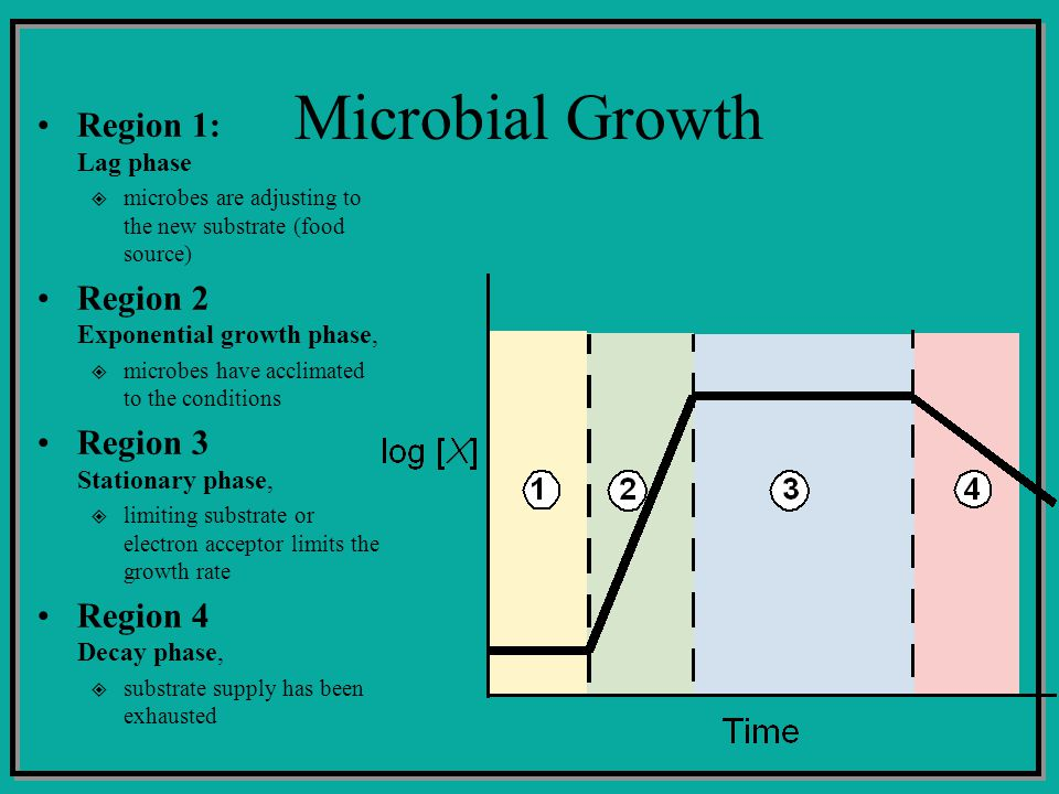 Microbial Growth Region 1: Lag phase microbes are adjusting to the new substrate (food source) Region 2 Exponential growth phase, microbes have acclim