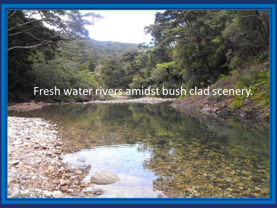 Fresh water rivers amidst bush clad scenery.
