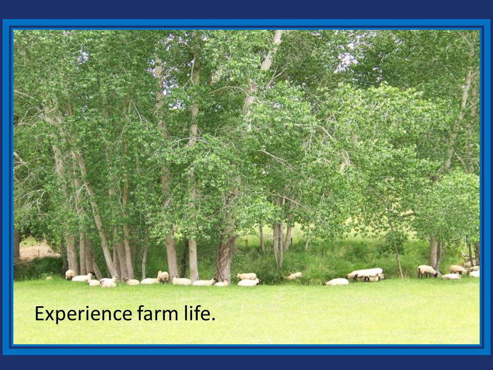 Experience farm life.