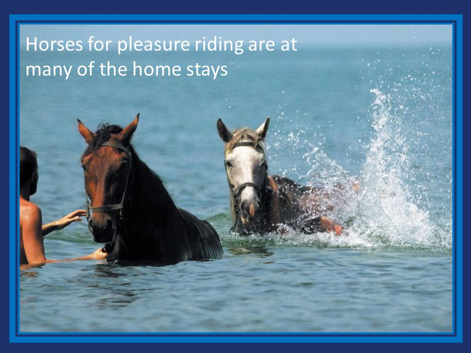 Horses for pleasure riding are at many of the home stays