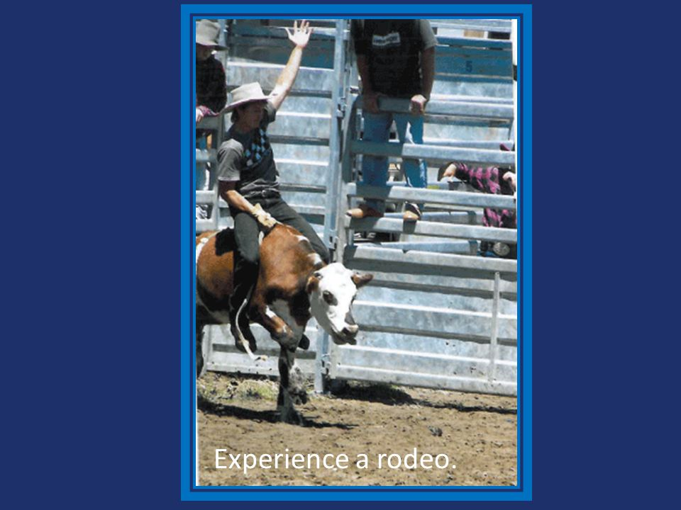 Experience a rodeo.