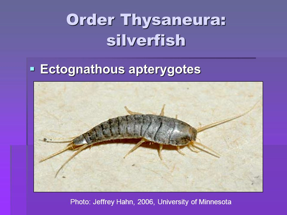 Order Diptera: flies! http://www.sccs.swarthmore.edu/users/03/cweiss/bugs/glossary.html