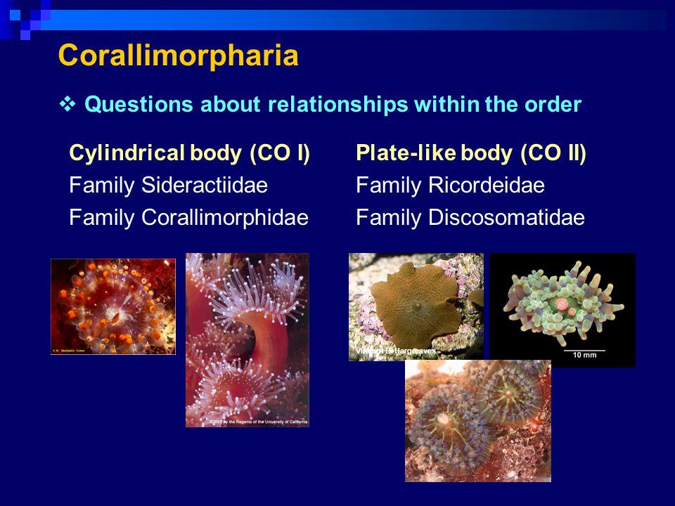 Corallimorpharia Cylindrical body (CO I) Family Sideractiidae Family Corallimorphidae Plate-like body (CO II) Family Ricordeidae Family Discosomatidae