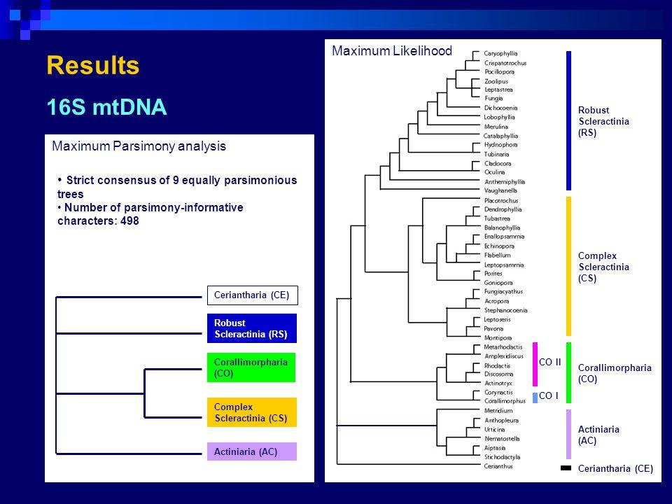 28S rDNA maximum likelihood analysis 18S rDNA maximum likelihood analysis CO CS AC CE RS CO II CO I CE CO AC Scleractinia CO II CO I