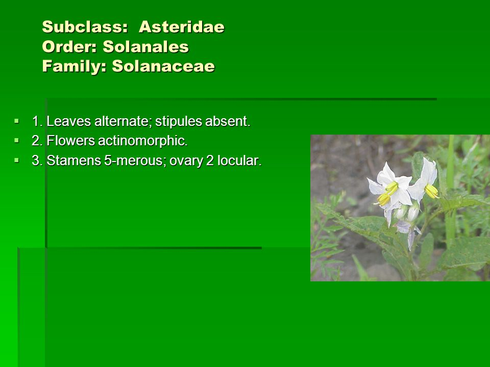 Subclass: Asteridae Order: Solanales Family: Solanaceae Subclass: Asteridae Order: Solanales Family: Solanaceae 1.