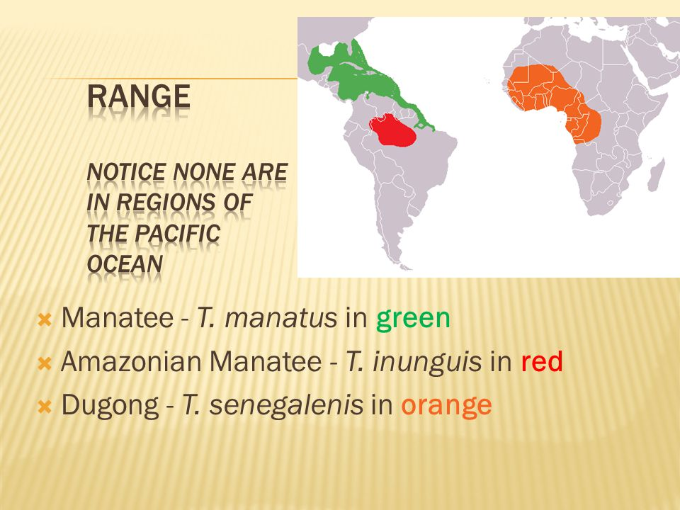 Manatee - T. manatus in green Amazonian Manatee - T. inunguis in red Dugong - T. senegalenis in orange