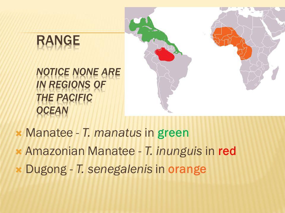 Manatee - T. manatus in green Amazonian Manatee - T.