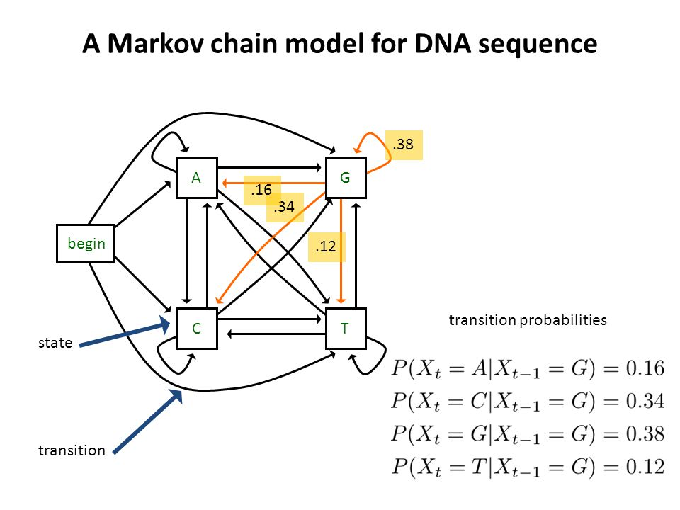 A Markov chain model for DNA sequence A TC G begin state transition.34.16.38.12 transition probabilities