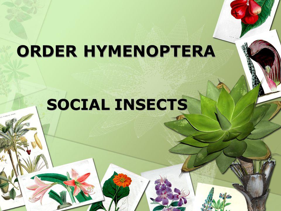 ORDER HYMENOPTERA ORDER HYMENOPTERA SOCIAL INSECTS