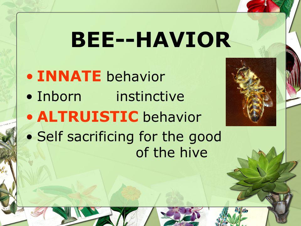 BEE--HAVIOR INNATE behavior Inborninstinctive ALTRUISTIC behavior Self sacrificing for the good of the hive