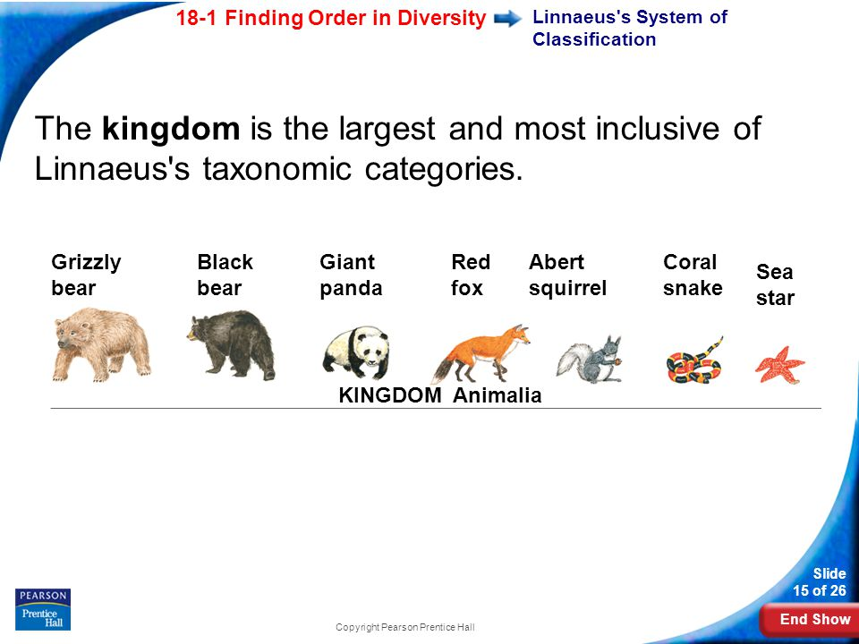 End Show 18-1 Finding Order in Diversity Slide 15 of 26 Copyright Pearson Prentice Hall KINGDOM Animalia Black bear Giant panda Grizzly bear Red fox Sea star Abert squirrel Coral snake The kingdom is the largest and most inclusive of Linnaeus s taxonomic categories.