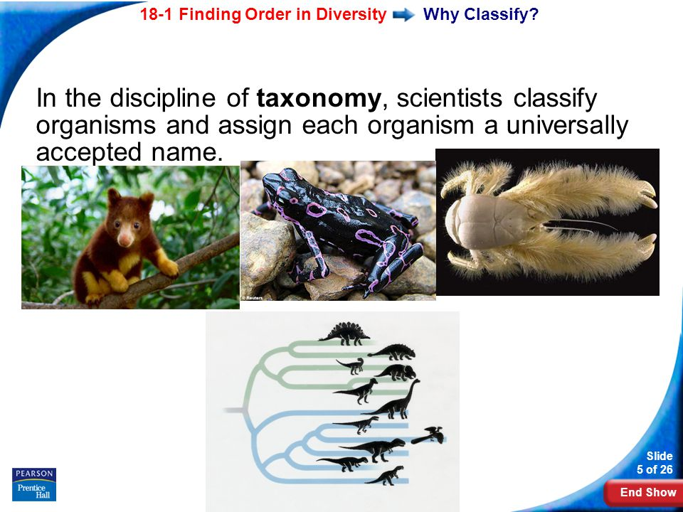 End Show 18-1 Finding Order in Diversity Slide 5 of 26 Copyright Pearson Prentice Hall Why Classify.