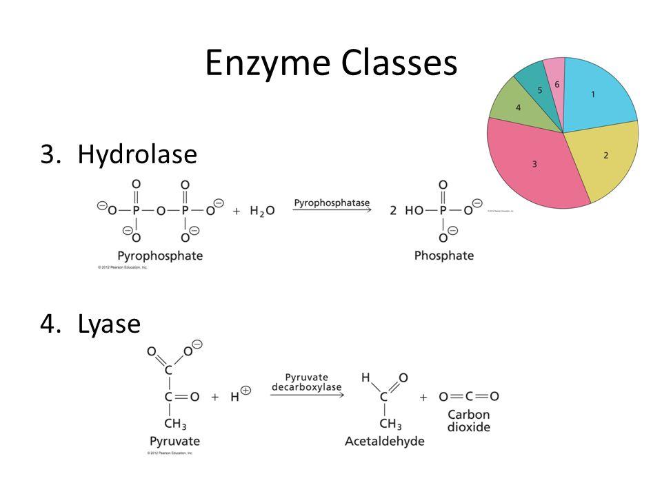 Enzyme Classes 3.Hydrolase 4.Lyase