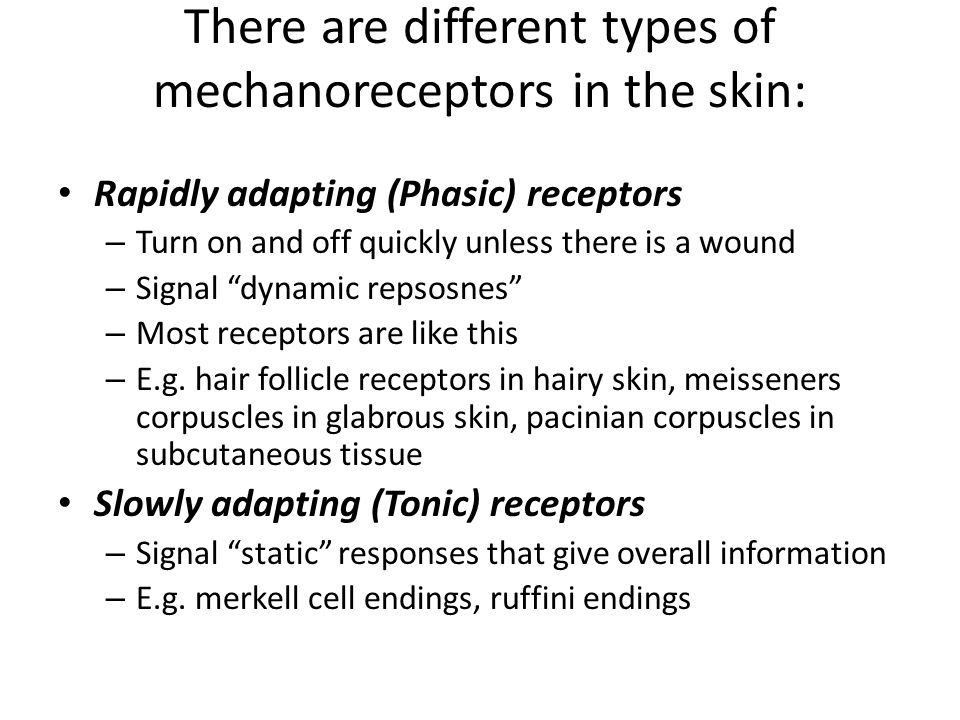 There are different types of mechanoreceptors in the skin: Rapidly adapting (Phasic) receptors – Turn on and off quickly unless there is a wound – Sig
