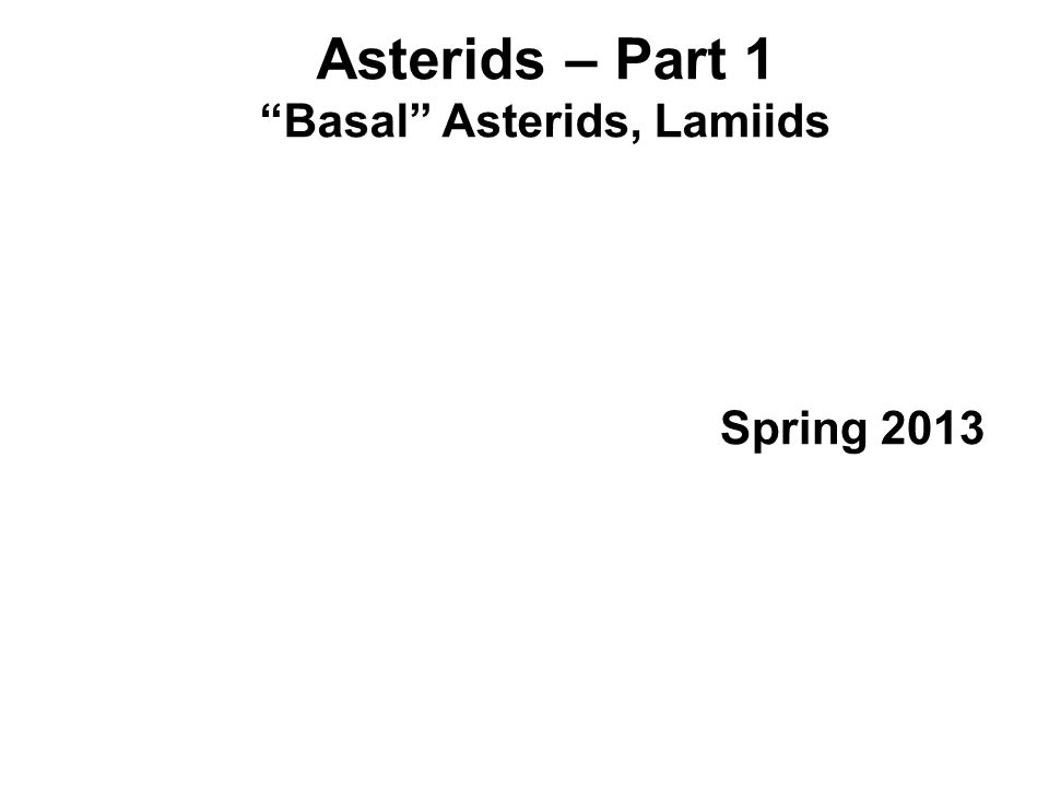 Asterids – Part 1 Basal Asterids, Lamiids Spring 2013