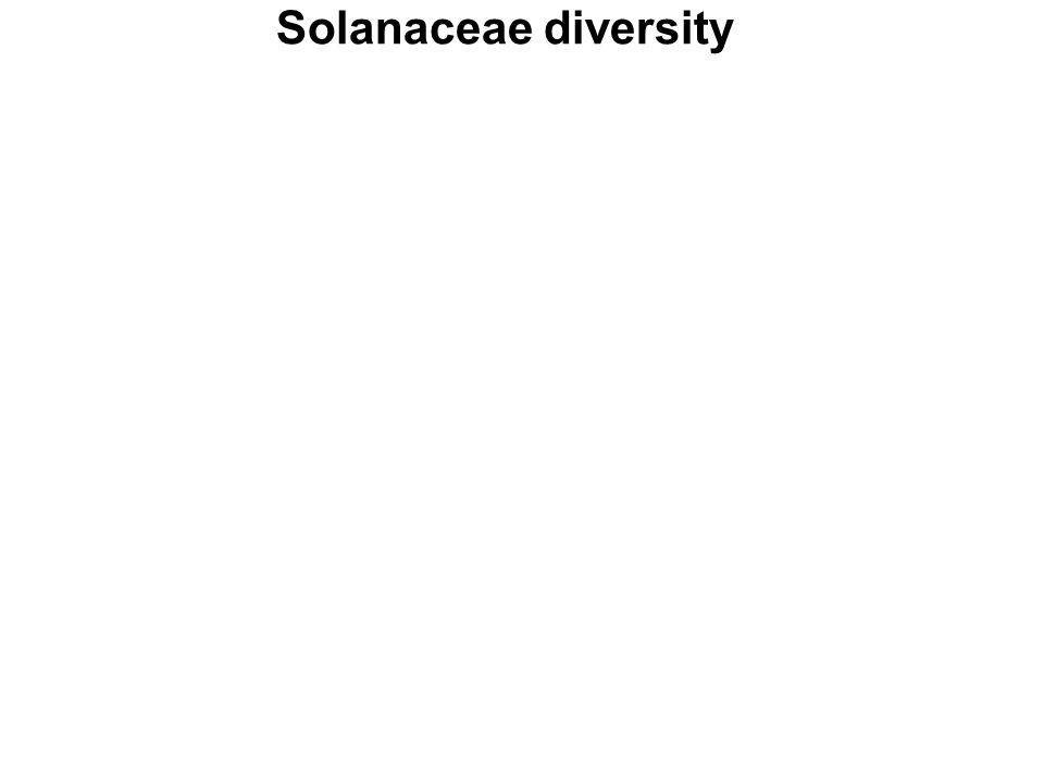 Solanaceae diversity