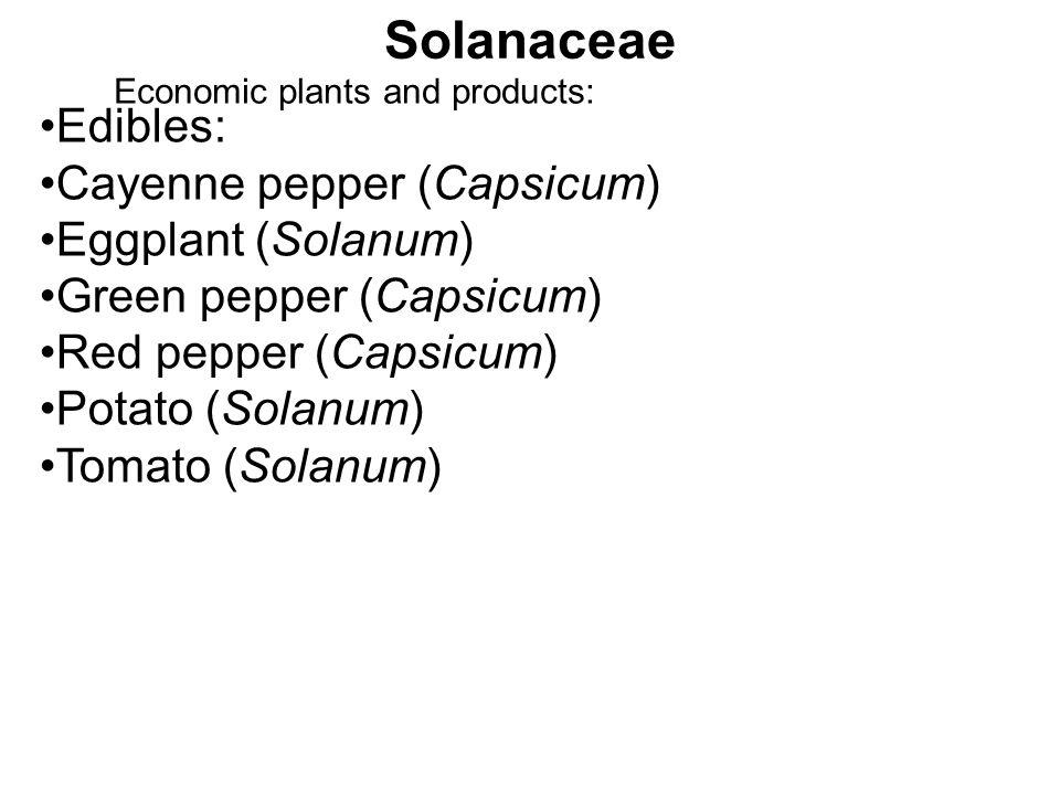 Solanaceae Economic plants and products: Edibles: Cayenne pepper (Capsicum) Eggplant (Solanum) Green pepper (Capsicum) Red pepper (Capsicum) Potato (S