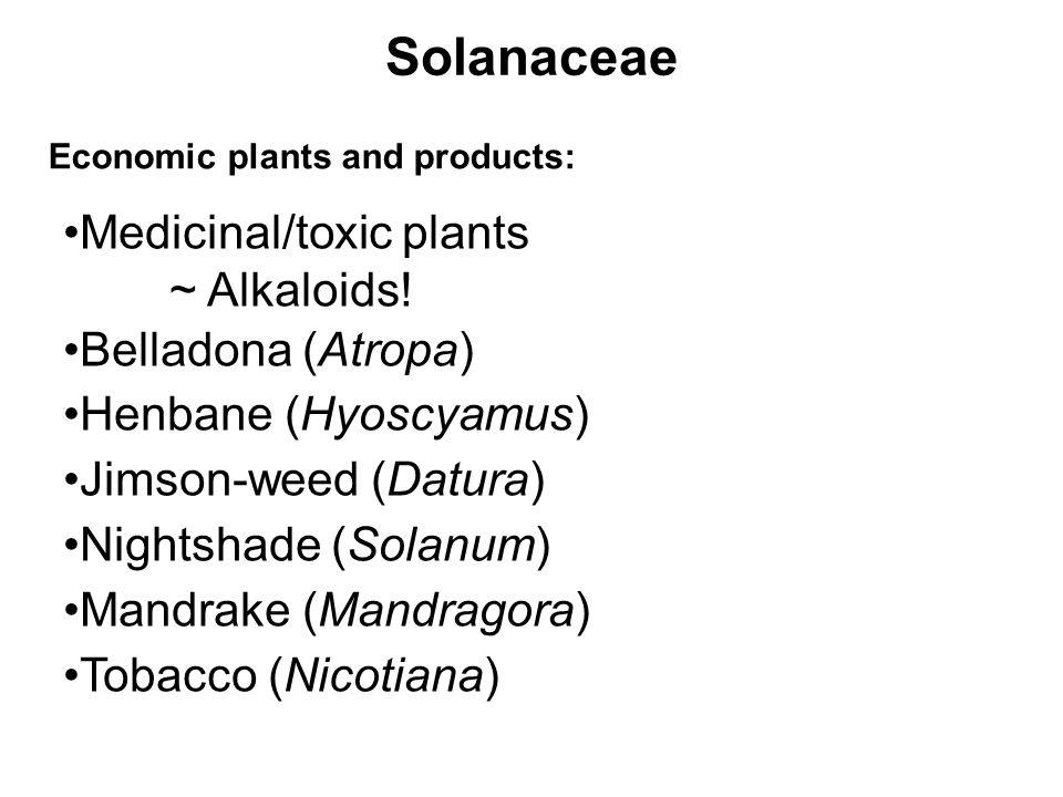 Solanaceae Economic plants and products: Medicinal/toxic plants ~ Alkaloids! Belladona (Atropa) Henbane (Hyoscyamus) Jimson-weed (Datura) Nightshade (