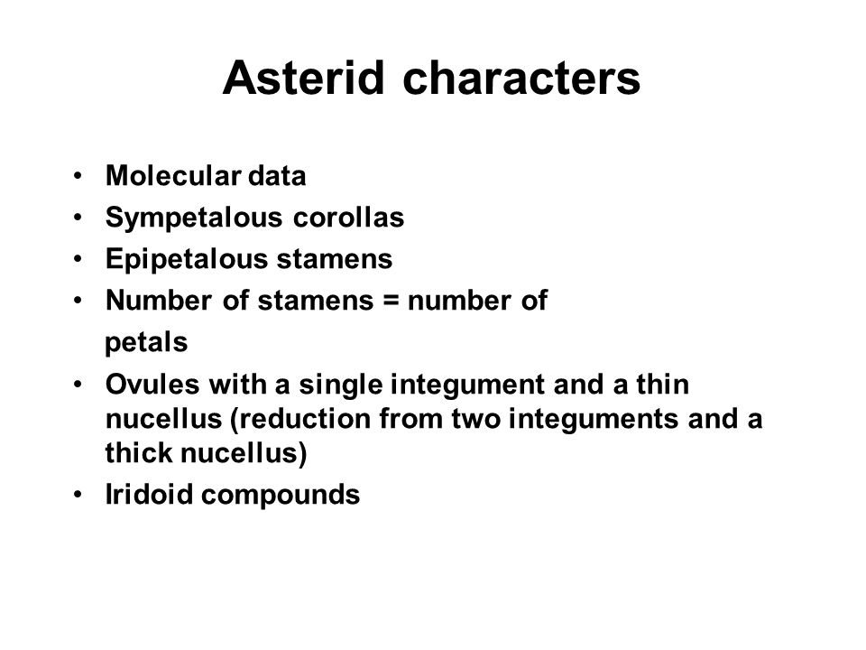 Asterid characters Molecular data Sympetalous corollas Epipetalous stamens Number of stamens = number of petals Ovules with a single integument and a
