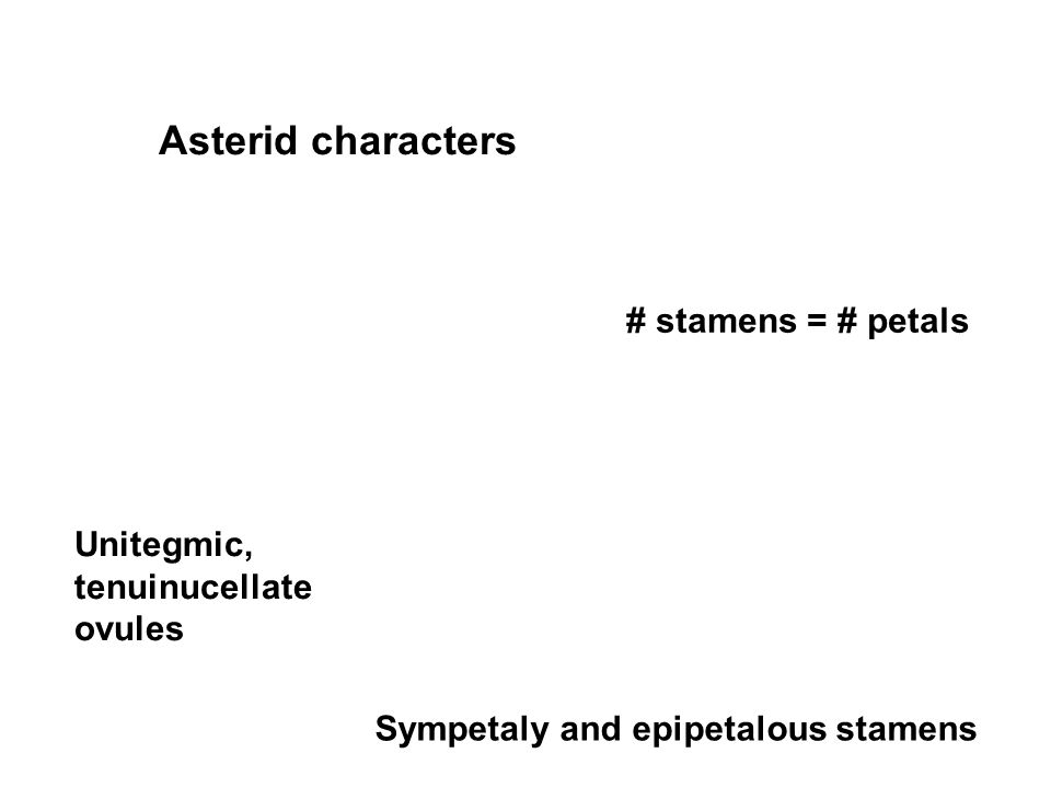 Asterid characters Sympetaly and epipetalous stamens # stamens = # petals Unitegmic, tenuinucellate ovules