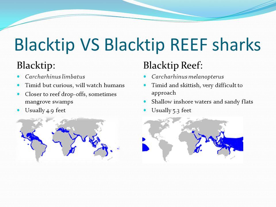 Blacktip VS Blacktip REEF sharks Blacktip: Carcharhinus limbatus Timid but curious, will watch humans Closer to reef drop-offs, sometimes mangrove swa