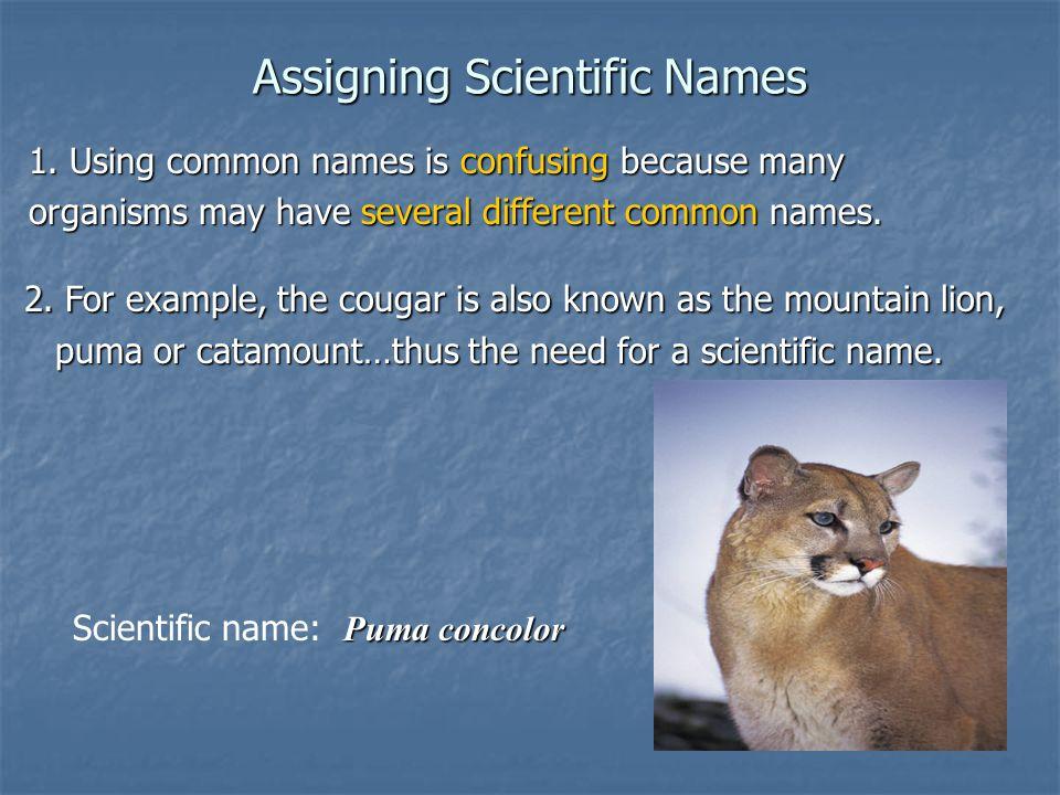 Assigning Scientific Names 3.